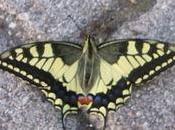 Barbara Kingsolver, collina delle farfalle, Neri Pozza. libro cuore della settimana