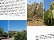 Quell'olivo tronco contorto, attorcigliato, oscure crepe...