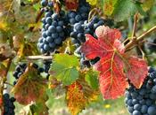 Greatest Travel Experience. #Autumn wine travel.