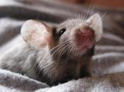 Squillo topo,incontro ravvicinato!