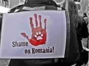 L'olocausto romeno iniziato Come aiutare randagi rischiano brutale inutile soppressione?