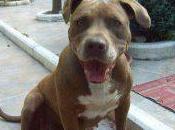 nostro tributo Zara, cane famiglia scomparso oggi anni!