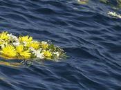 """Ecatombe Lampedusa: stasera prima visione film """"Terraferma"""" Crialese, salta """"Affari Tuoi"""""""