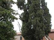 Primo albero monumentale Florablog Contest: cipresso Francesco Villa Verucchio (RN)