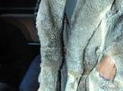 Kanye West Furrylicious !!!! Ahahah
