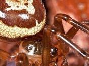 Inghilterra, morso ragno rischia perdere gamba