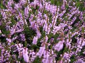 fiori raccontano...Speranza Solitudine