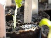 vuole fiore… Dedichiamo questa canzone alla giornata mondiale cibo, biodiversità alle sementi