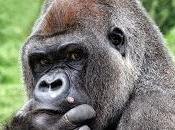 Guarda, scimmia!