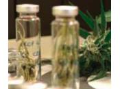Cannabis chemioterapia?