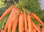 Novembre 2013. Calendario lunare delle semine nell'orto