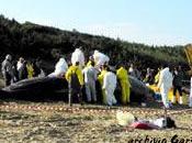 Considerazioni chiarimenti sullo spiaggiamento Capodogli 12/2009