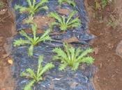 lavori nell'orto novembre. Semine, raccolti, compostaggio, pacciamatura, tunnel plastici parte)