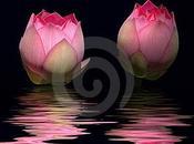 cos'è vita Budda insegna uomini donne ogni latitudine /Spazio Riflessione