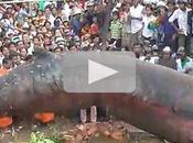 Mistero vietnam balena trovata nell'entroterra