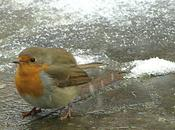 Arriva l'inverno! Aiutiamo uccelli sopravvivere!