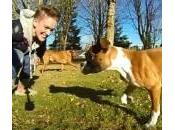 Duncan, cucciolo boxer solo zampe (Video)