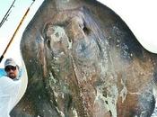 Strana creatura pescata Miami Beach