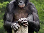 Psichismo scimmie