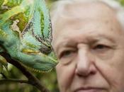 "alle 17.45 Knowledge (Mediaset Premium) ""David Attenborough curiosità della natura"", alla scoperta misteri celati dietro animali curiosi"