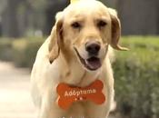 Grazie 'Invisible Owner' adottati cani soli mesi