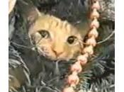 Gatti sull'albero natale: compilation (Video)