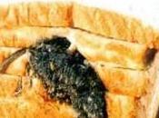 Gran Bretagna, trova topo incastrato pane