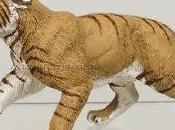 tigre denti sciabola Giuseppe Budetta