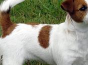 Roma. Villa Ada. Torturato ucciso. Storia ordinaria criminalità contro cani Pubblico affinché possano pagare responsabili.