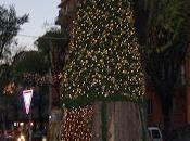 L'albero-presepe 2013
