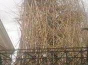 bambù illuminato festa Macro Roma