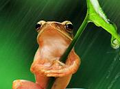 Foto divertenti regno animale 2013