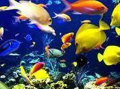 """""""Chissà pesci piangono"""""""
