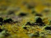 Rubrica Verde Lunedì, gennaio: nell'Inghilterra verde Jane Austen