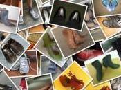 Come creare collage foto online gratis tramite Collagerator