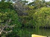 Greentrek: turismo sostenibile Ecuador Ande, Amazzonia Galapagos