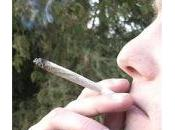 Legalizzazione delle droghe leggere. Italia facciamo quello riusciamo fare meglio: struzzi.
