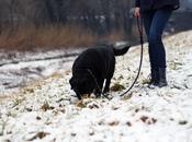 Passeggiare nella neve