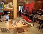 Anche italia avra' cafe'