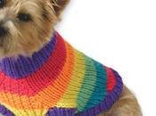 Quando vedi cane maglioncino qualsiasi altro...