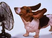 ILDV: Ventilazione apprezzabile.