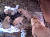 Stornara, cuccioli abbandonati loro tragico destino