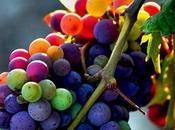 L'importanza della coltivazione vite qualità vino