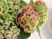 MOMENTI FIORE DELLA DOMENICA Floral Sunday