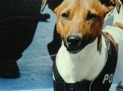 """""""Pocho"""", cane-poliziotto fiuto infallibile"""