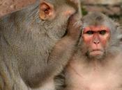 Ispirato film Avatar, scienziato connetta scimmie microchip