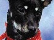Ruby (1993-2011)