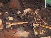 Mammut, mastodonti bisonti giganti scoperti cimitero pressi Aspen