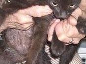 gattini sono stati adottati