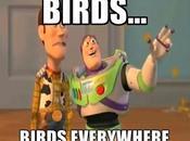 Uccelli... Uccelli dappertutto!